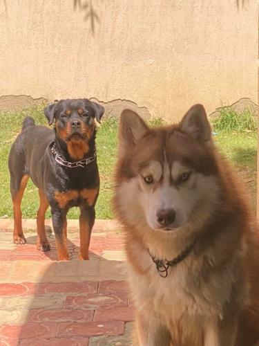 خوف كلاب النفياوي عليه جعله يطمئن لمعاني الوفاء