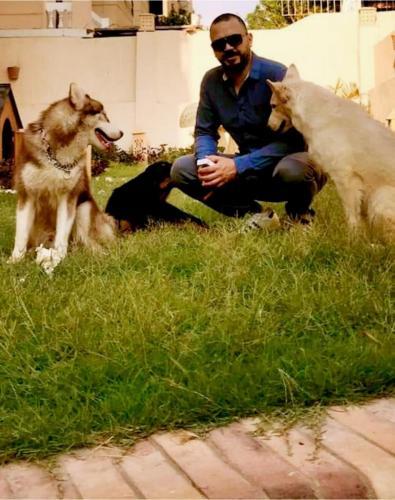 النفياوي مع كلابه روي و فرعون و بريشكا