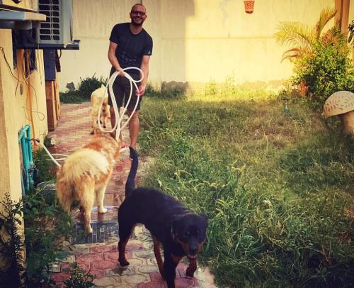 النفياوي بيرش الحديقة مع كلابه