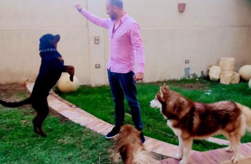 مصطفى النفياوي مع كلابه